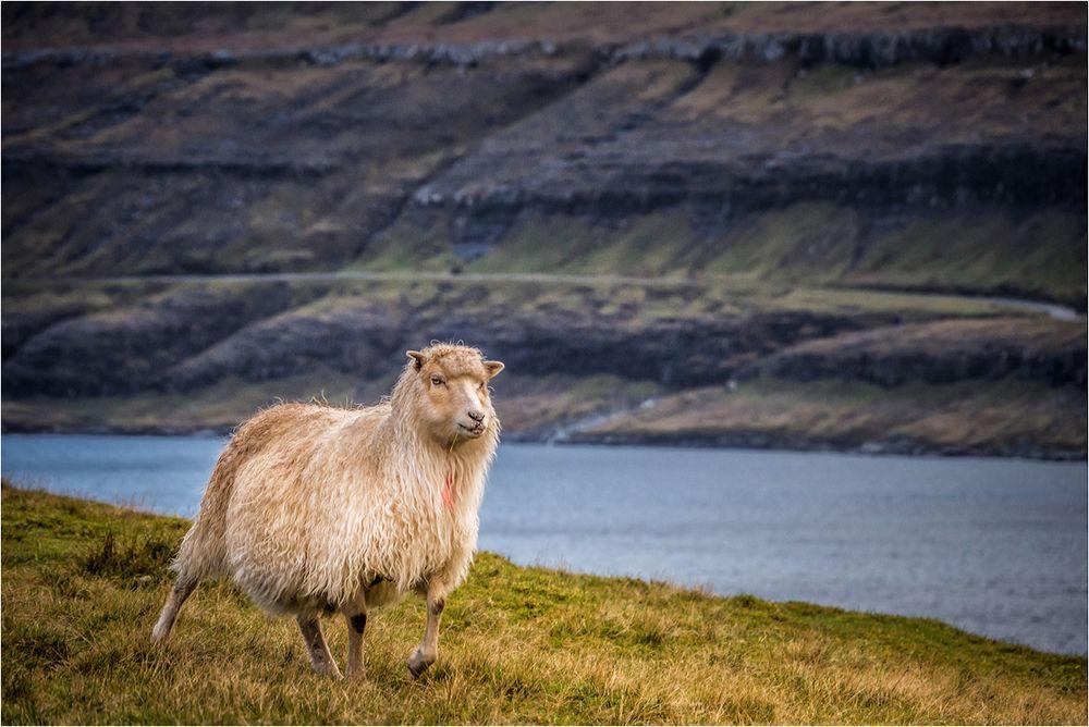 Living in Faroe Islands