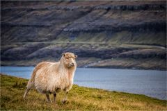 Living in Faroe Islands
