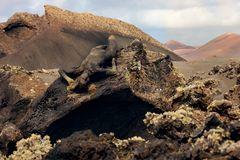 living lava cave