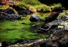 Living stones in fairyland