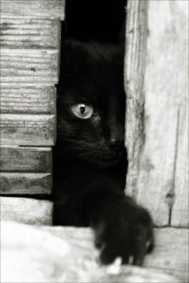 ll gatto misterioso