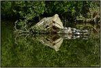 L'île aux tortues, le bain de soleil.
