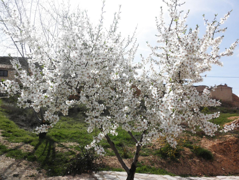 Llegada de la Primavera