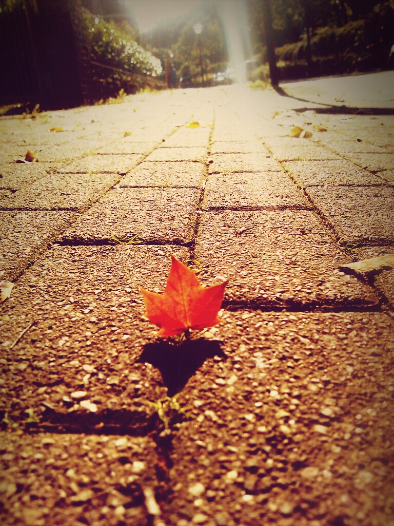 Llego el otoño