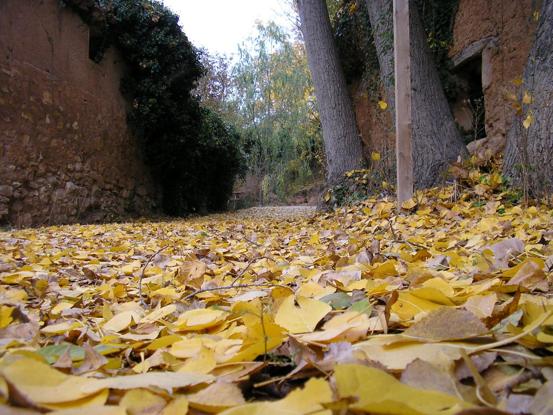 Lluvia de hojas