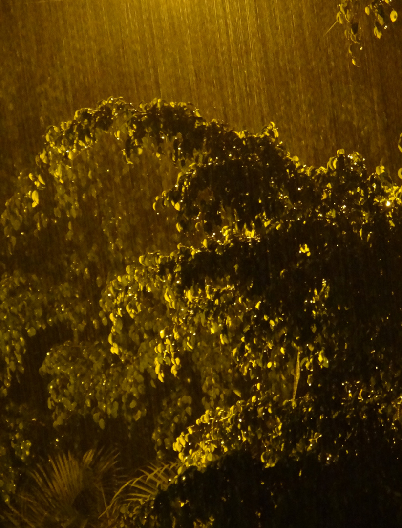 Lluvia de noche