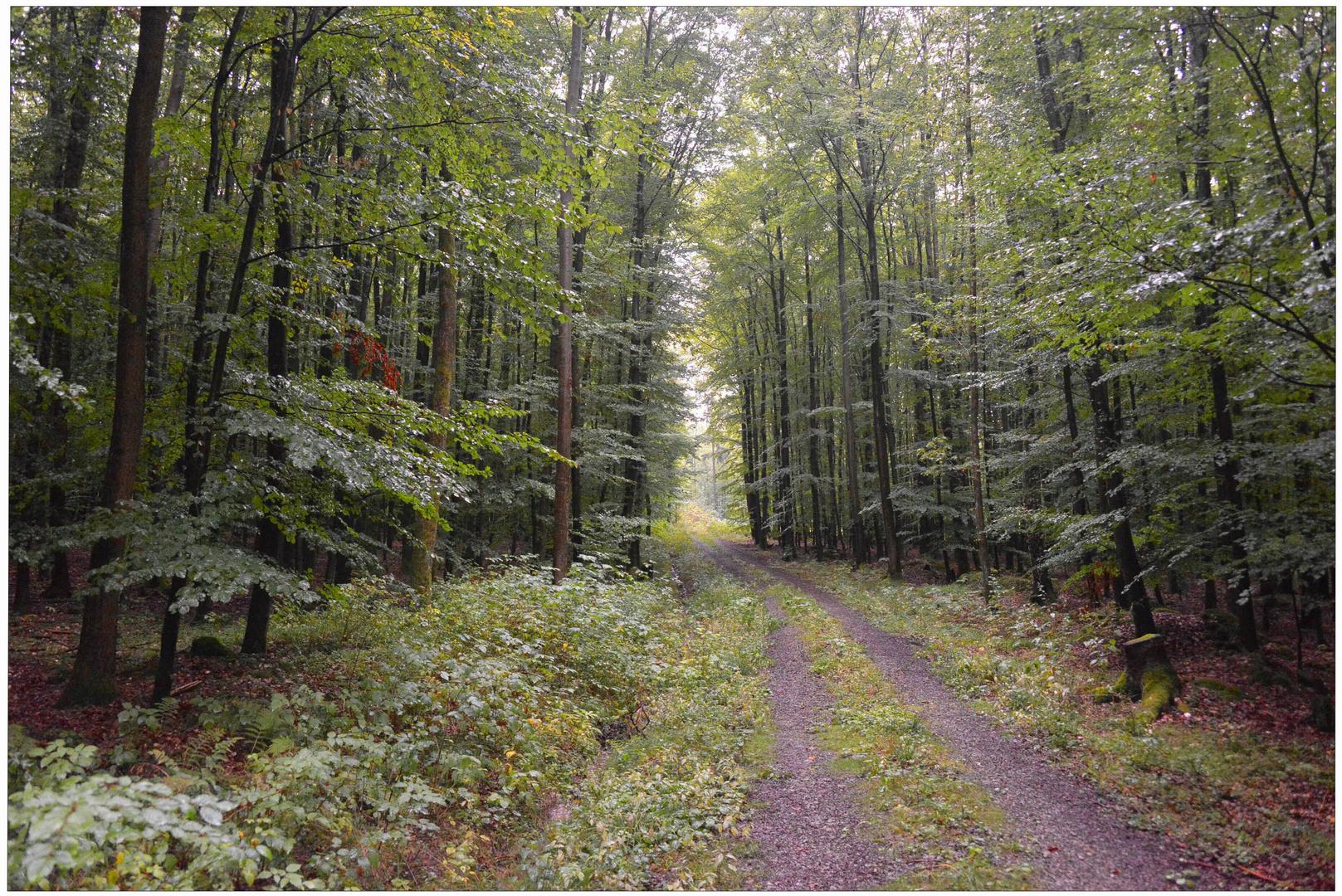 Lluvia En El Bosque Iii Camino Por El Bosque Regen Im Wald Iii
