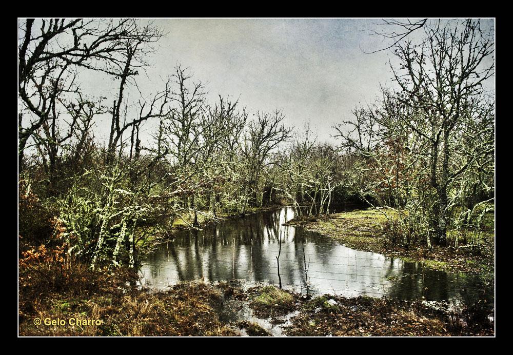 Lluvia en el robledal