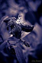 Lluvia Violeta