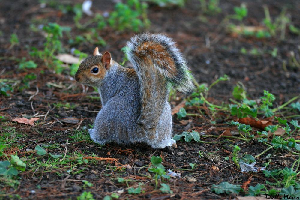 Lo scoiattolo della Vigorsol