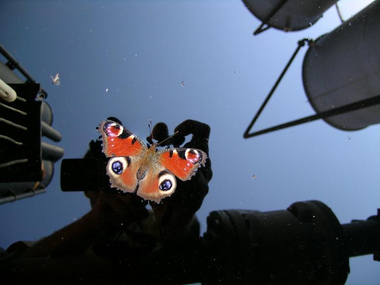 Lo specchio della farfalla.