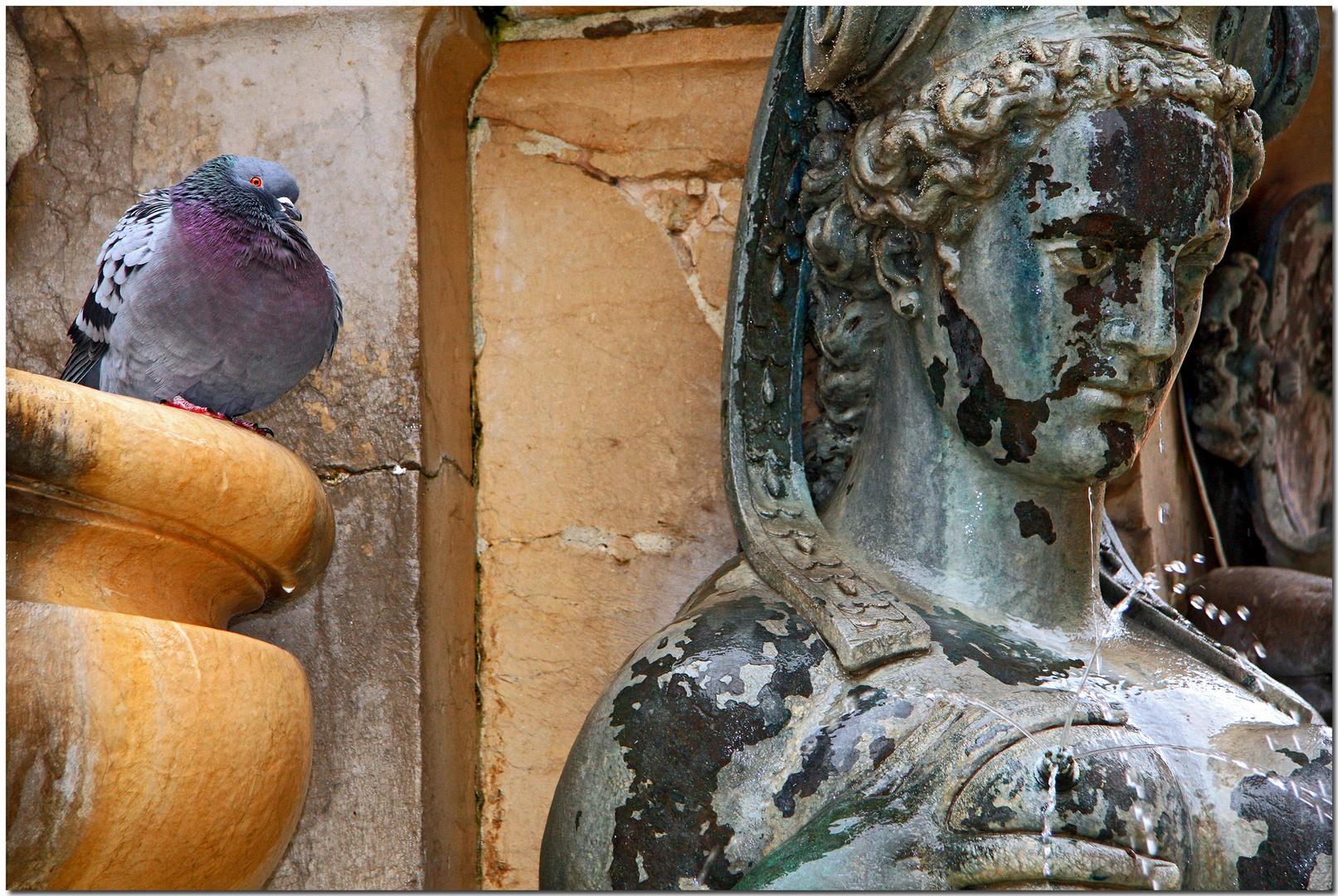 Lo stupefatto sguardo della colomba