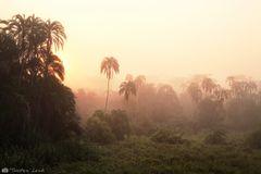 Lobéké-Nationalpark