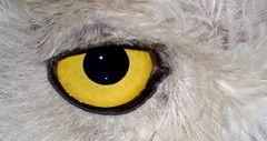 L'occhio del predatore