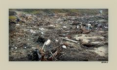 L'océan a vomi nos poubelles...