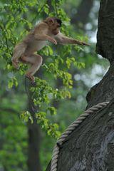 Locker vom Baum