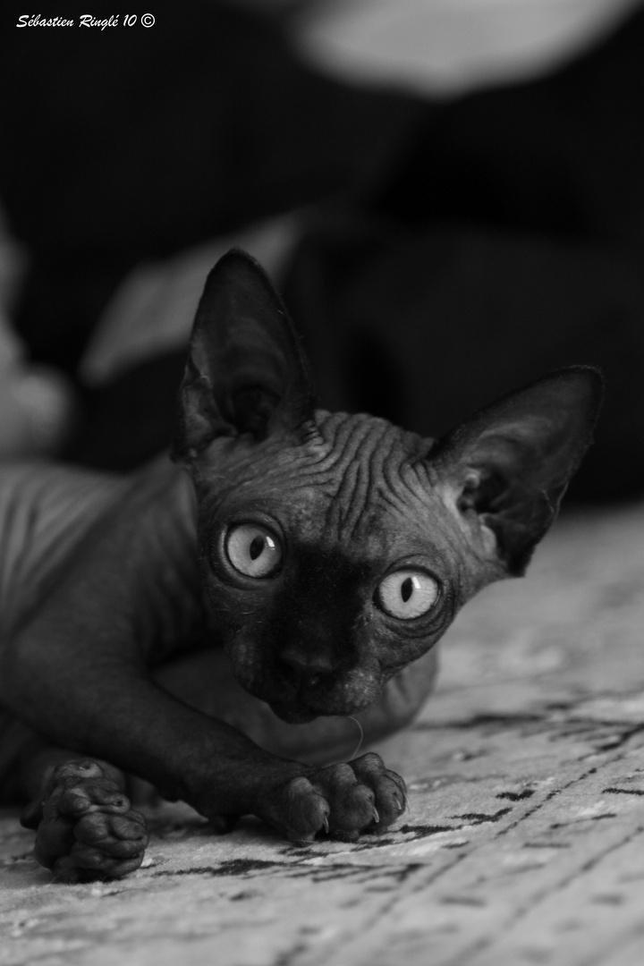 L'oeil de chat.