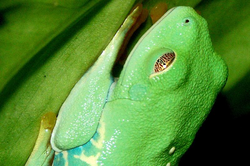 L'oeil de l'Amazonie