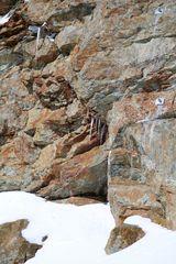 Löwe vom Jungfraujoch
