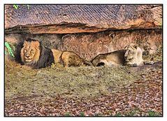 Löwen im Schutz der Felsen
