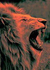 Löwen Männchen popart