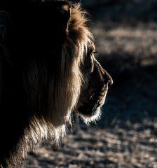 Löwen Profil