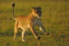 Löwen Sprint