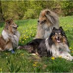 ~ Löwenzahn ~