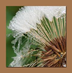 Blumen querbeet