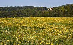 Löwenzahnwiese mit Waldkapelle!