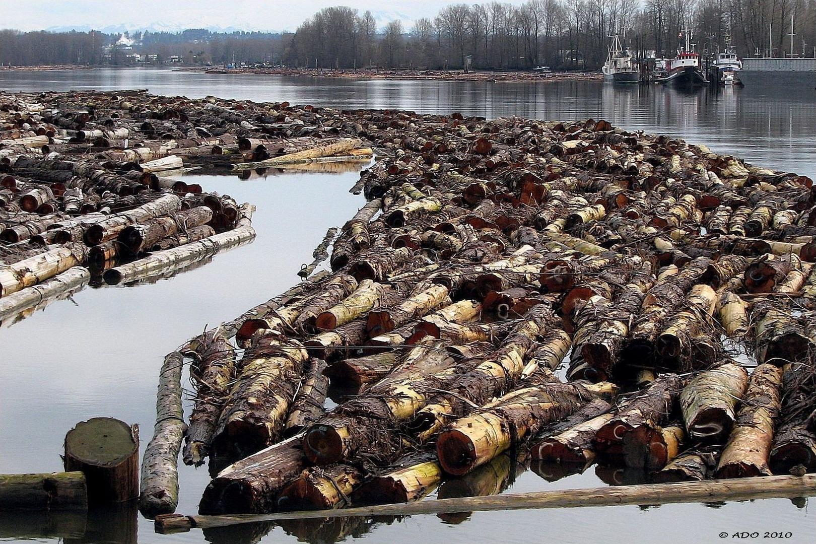 Log Booms on the Fraser River