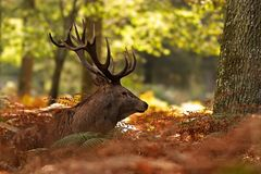 ...loin dans ma forêt...