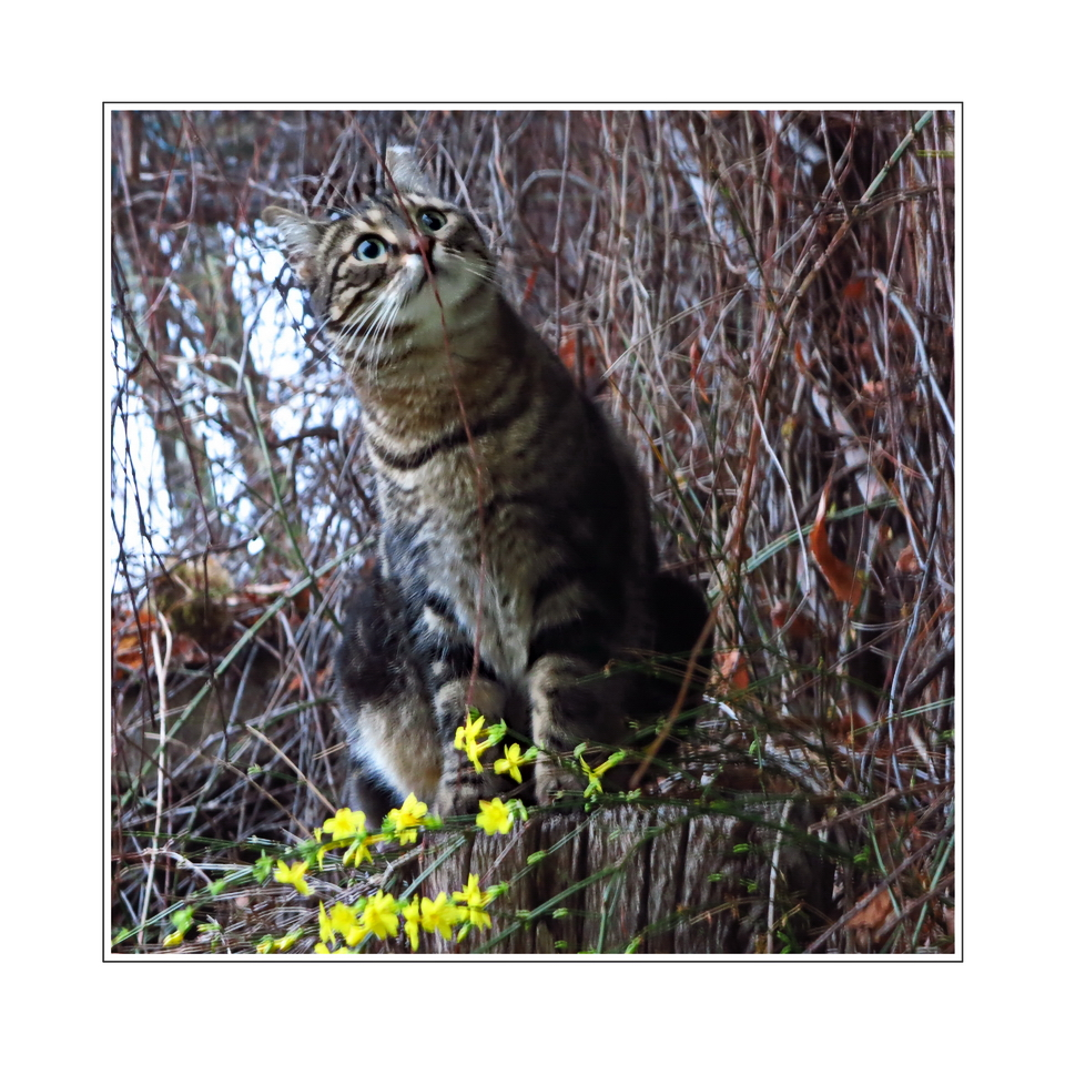 Lola (street cat from Athens),
