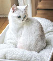 Lola, unsere Prinzessin