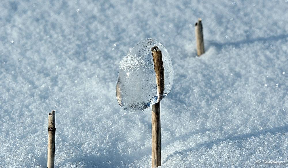 Lollipop.....