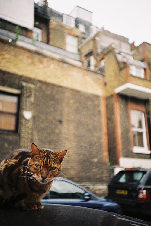 .: london cat