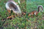 London's Hörnchen
