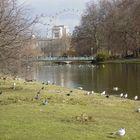 Londra - St James Park