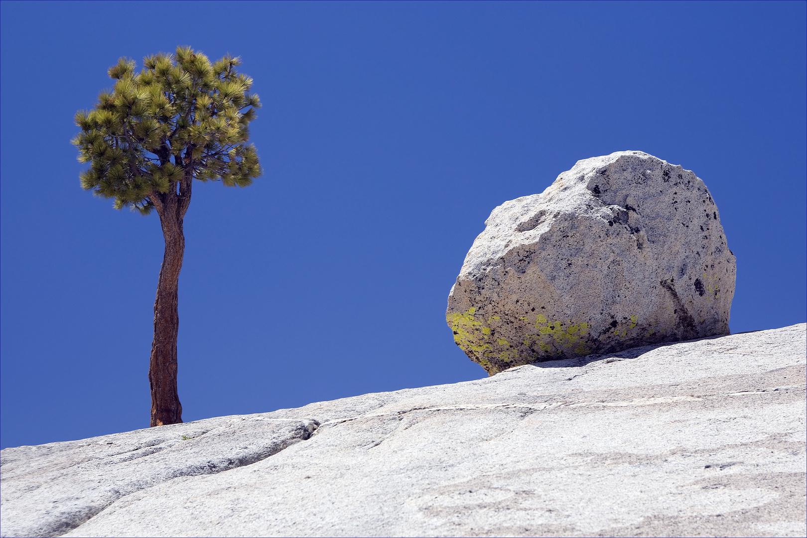 Lone Tree and Boulder