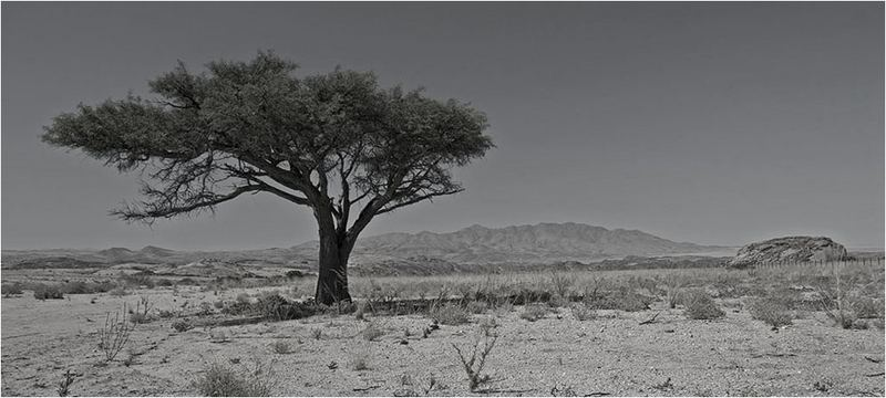 Lone Tree of Namibia