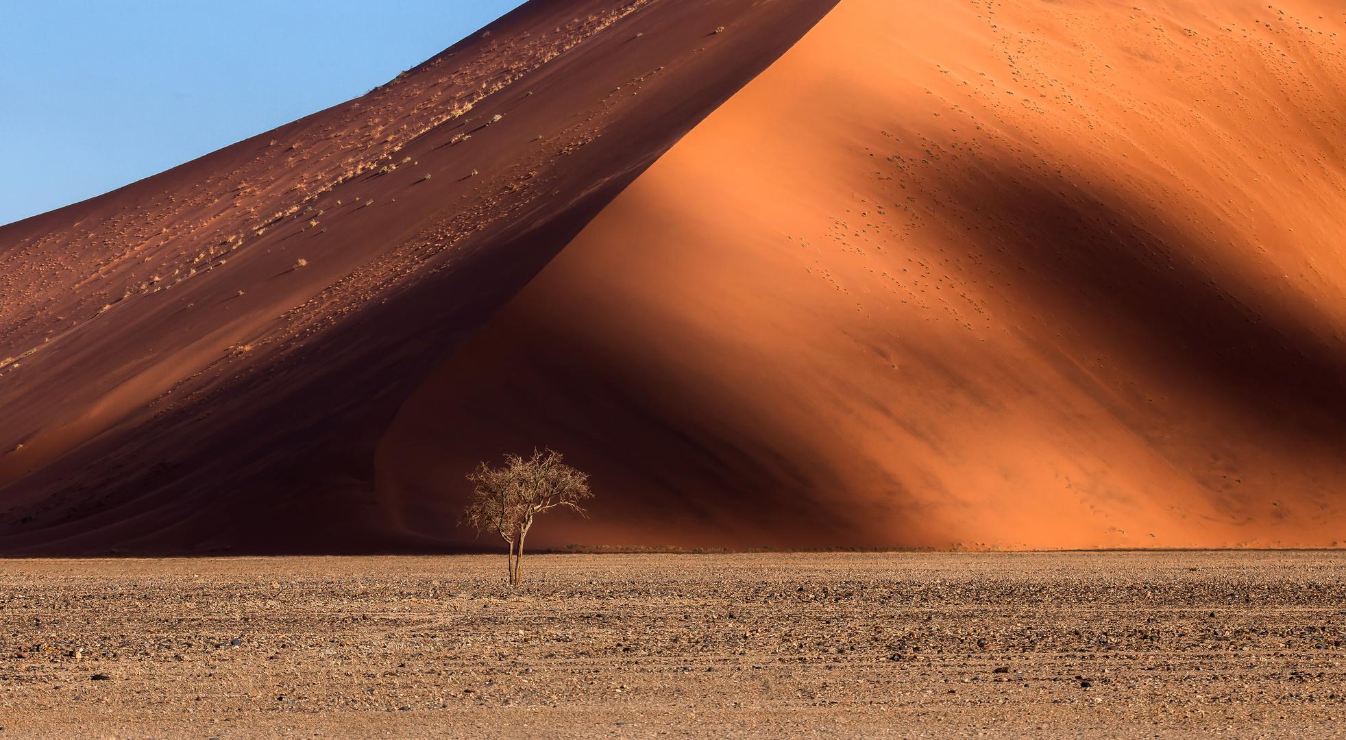 Lone Tree (Tsauchab Valley, Namibia)