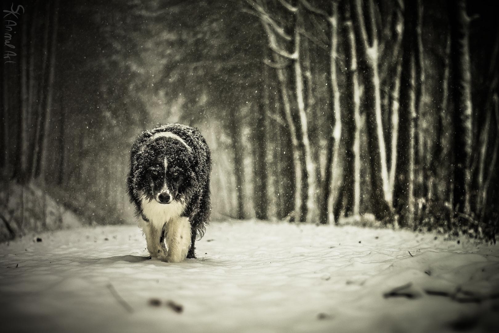 Lone Wolf...