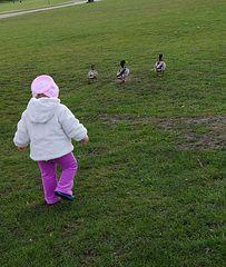 Loneliness of the long-distance Duckherd