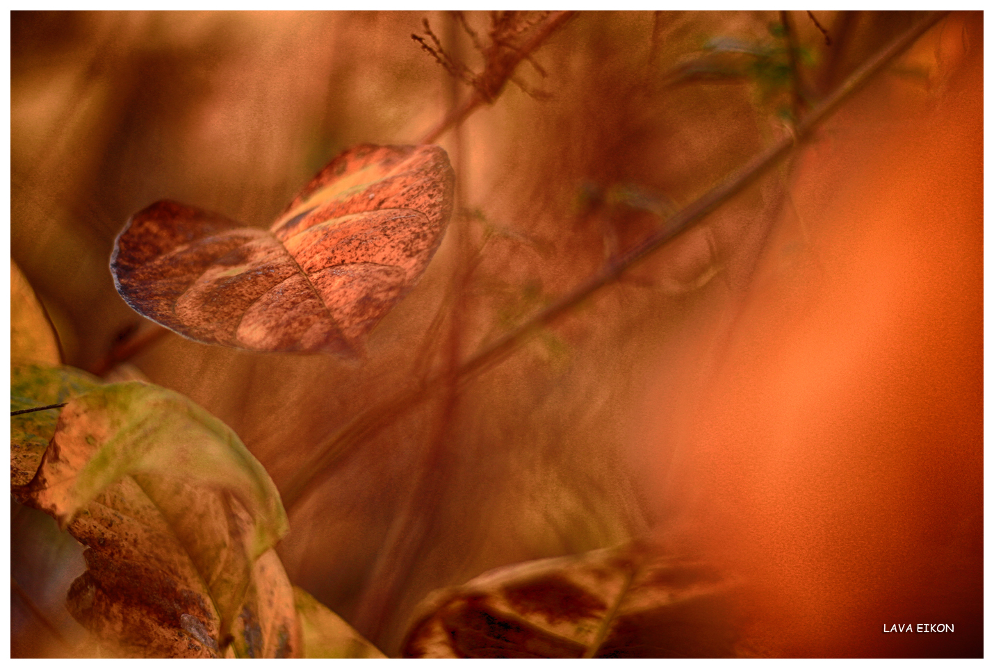 Lonely Heart In Autumn