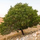 Lonely Tree  B0002996-13