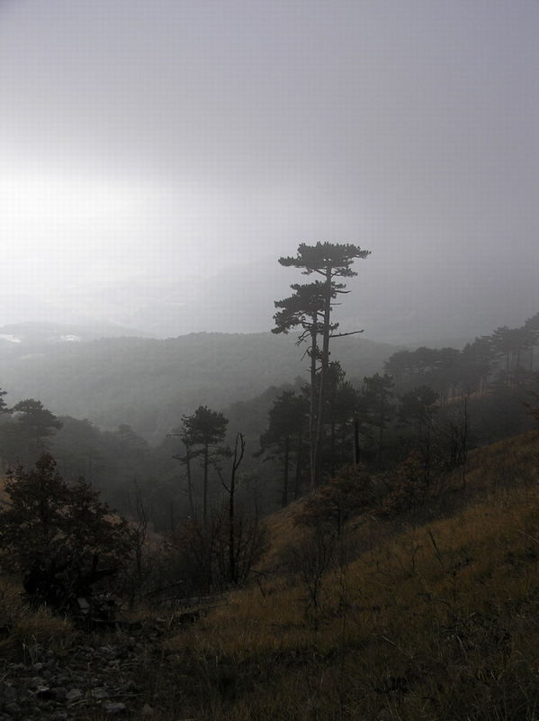 Lonely tree in Crimea forest