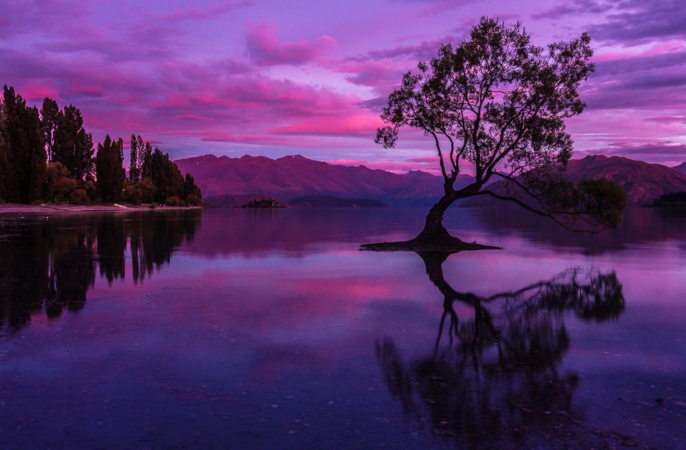 lonely tree/ Wanaka