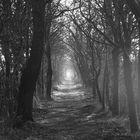 Lonely Way / Einsamer Weg