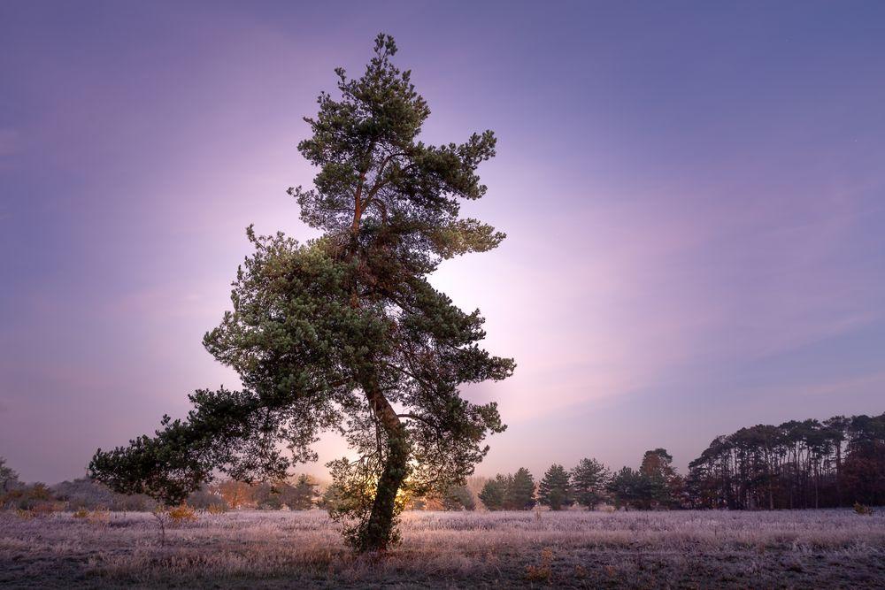 Lonely:Tree