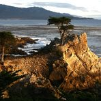 Lonesome Cypress at Pebble Beach
